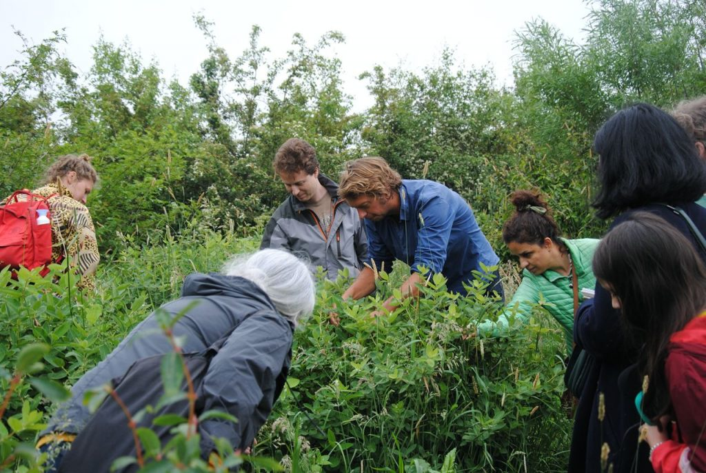 Image description: several people harvesting in the food forest.